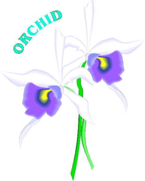 orquidea-imagem-animada-0002