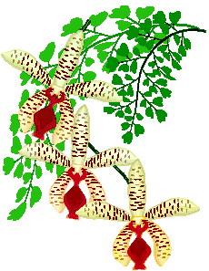 orquidea-imagem-animada-0003