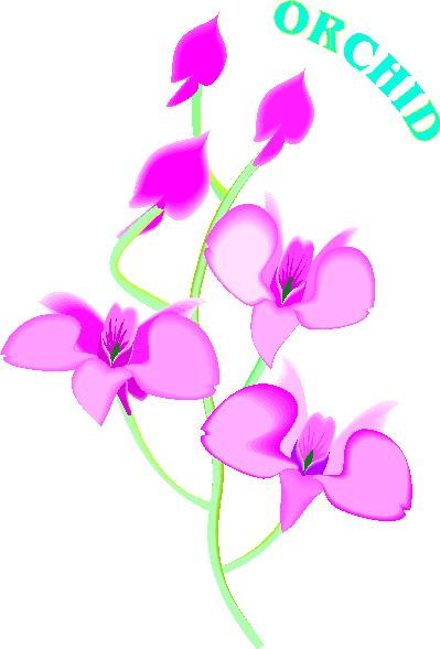orquidea-imagem-animada-0004