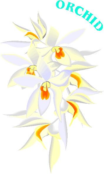 orquidea-imagem-animada-0005
