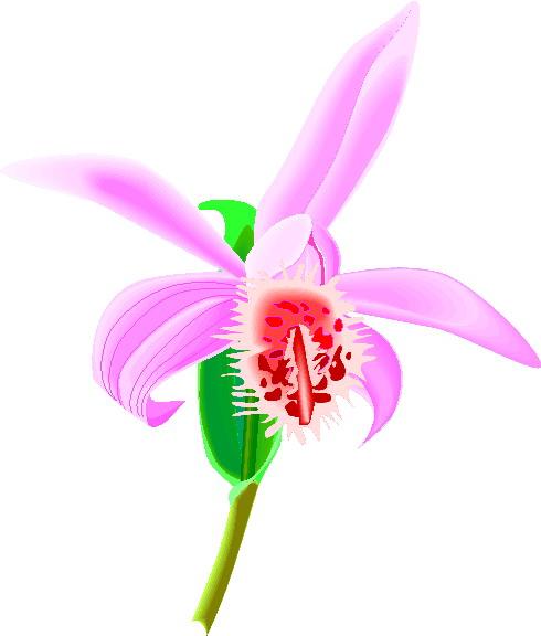 orquidea-imagem-animada-0008