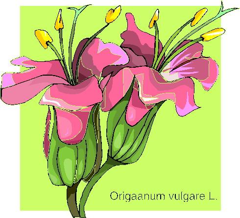 orquidea-imagem-animada-0012