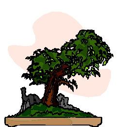 bonsai-imagem-animada-0022