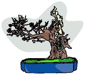bonsai-imagem-animada-0023