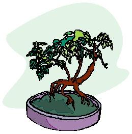 bonsai-imagem-animada-0024