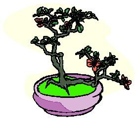 bonsai-imagem-animada-0026