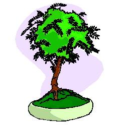 bonsai-imagem-animada-0027