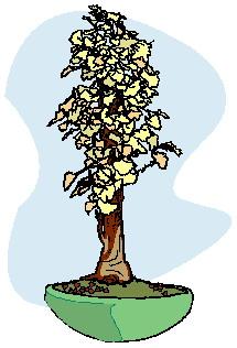 bonsai-imagem-animada-0028