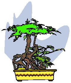 bonsai-imagem-animada-0039