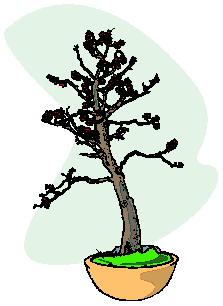 bonsai-imagem-animada-0042