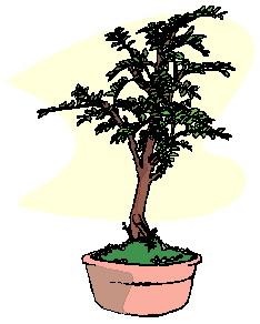 bonsai-imagem-animada-0045