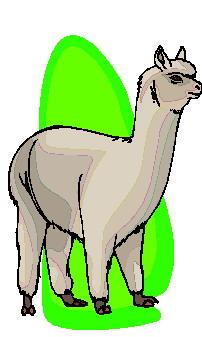 lhama-imagem-animada-0011