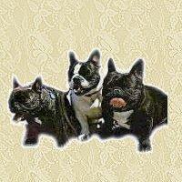 buldogue-frances-imagem-animada-0004