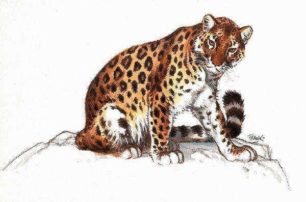 leopardo-imagem-animada-0017