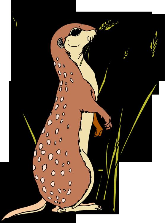suricate-imagem-animada-0009