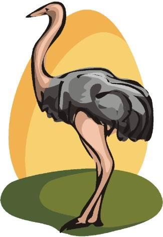 avestruz-imagem-animada-0006