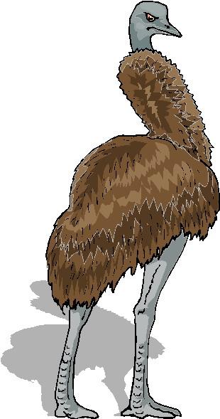 avestruz-imagem-animada-0008