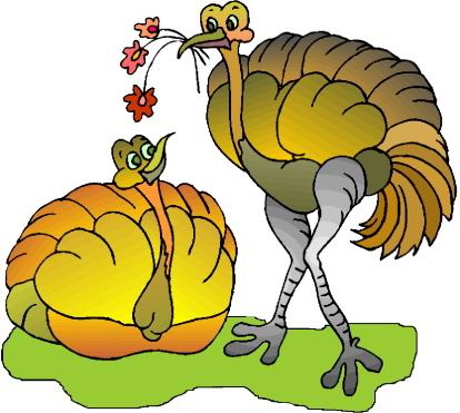 avestruz-imagem-animada-0009