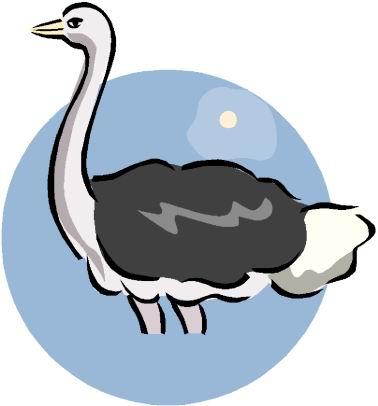 avestruz-imagem-animada-0015
