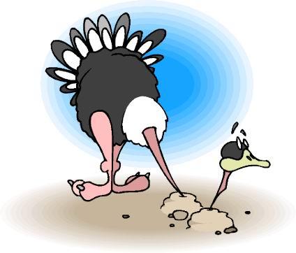 avestruz-imagem-animada-0017