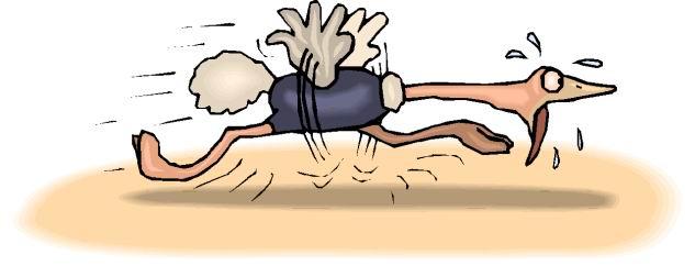 avestruz-imagem-animada-0019
