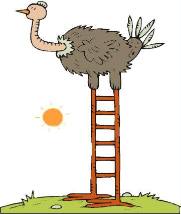 avestruz-imagem-animada-0025