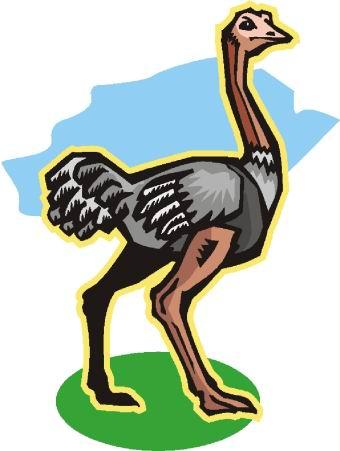 avestruz-imagem-animada-0029