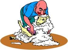 pastor-de-ovelha-imagem-animada-0008