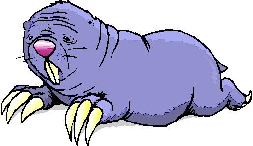 morsa-imagem-animada-0015