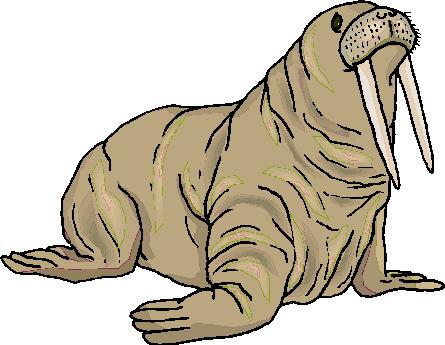 morsa-imagem-animada-0032