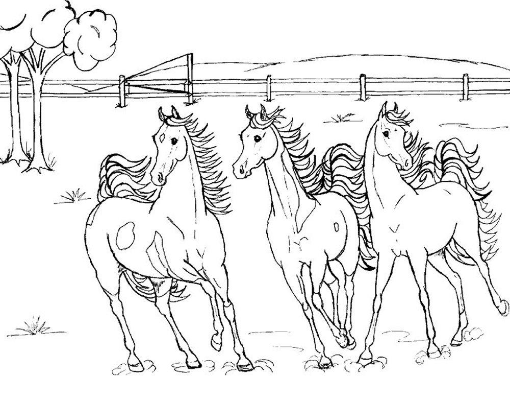 desenho-colorir-cavalo-imagem-animada-0024