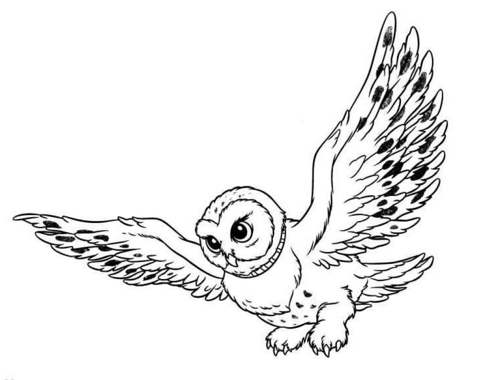 desenho-colorir-coruja-imagem-animada-0005