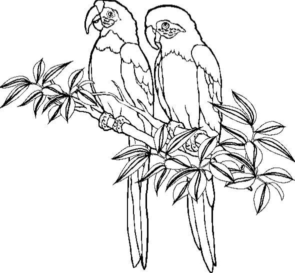 desenho-colorir-papagaio-imagem-animada-0012