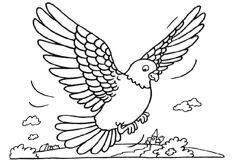 desenho-colorir-pombo-imagem-animada-0003