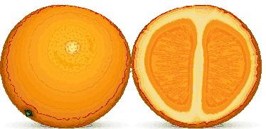 laranja-imagem-animada-0017