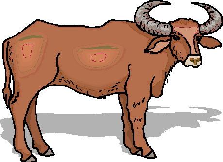 touro-imagem-animada-0038